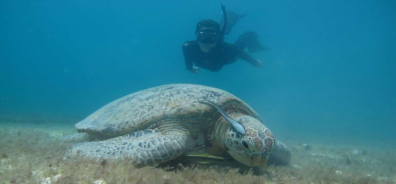 turtle conservation internships in asia