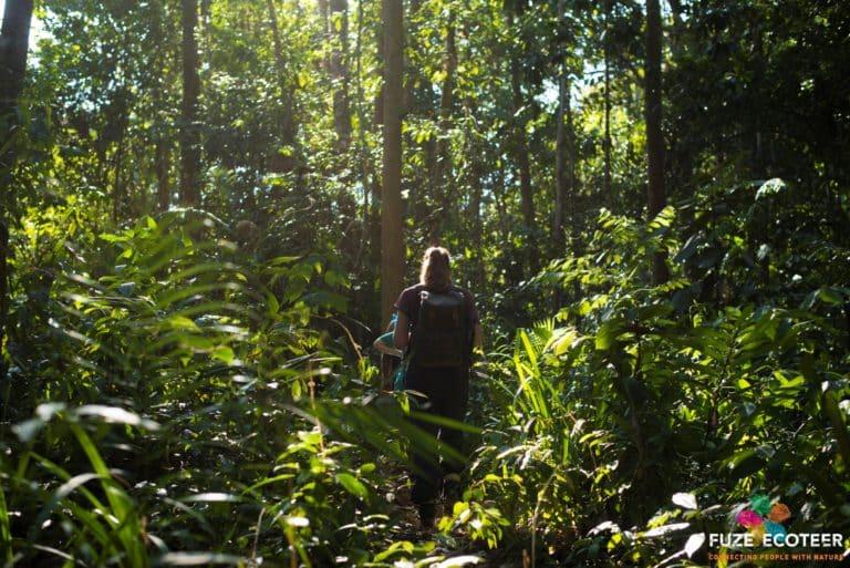 rainforest volunteer in malaysia