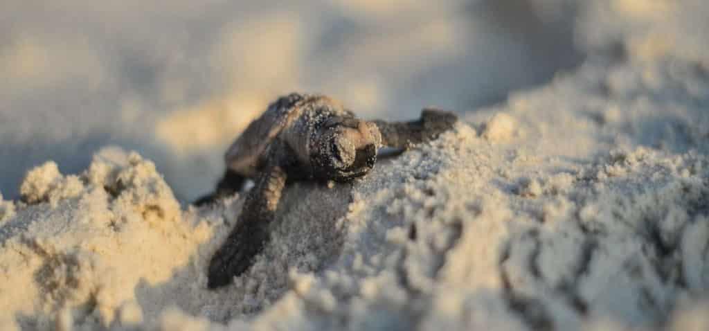 Sea turtles in Asia