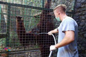 Wildlife conservation school trip care for orangutans