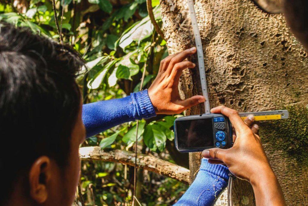 Rainforest conservation volunteer internship Malaysia
