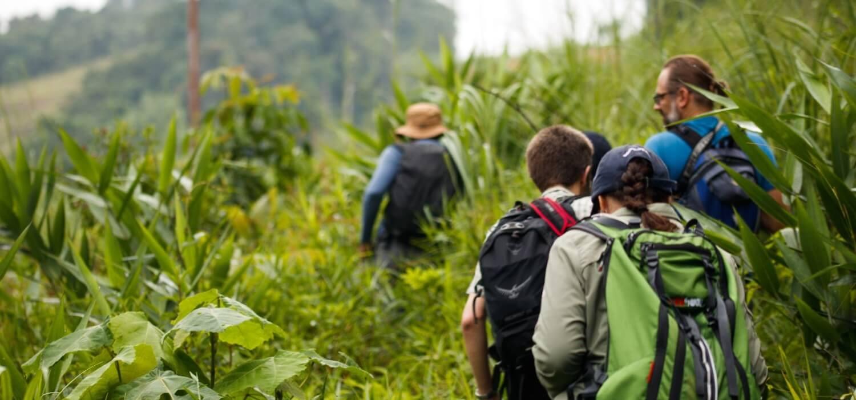 Rainforest conservation volunteer internship