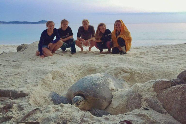 Volunteer with turtles