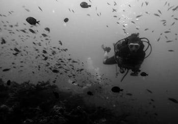 Carlotta on a coral reef survey during her divemaster internship