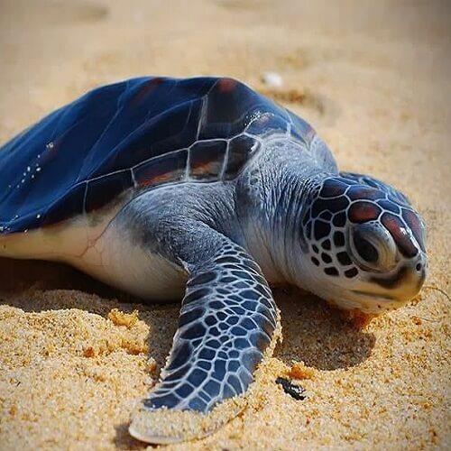 Short getaway in Terengganu Turtle conservation