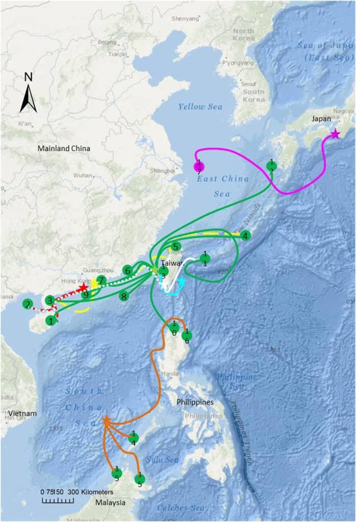 Green turtle migratoru routes in asia