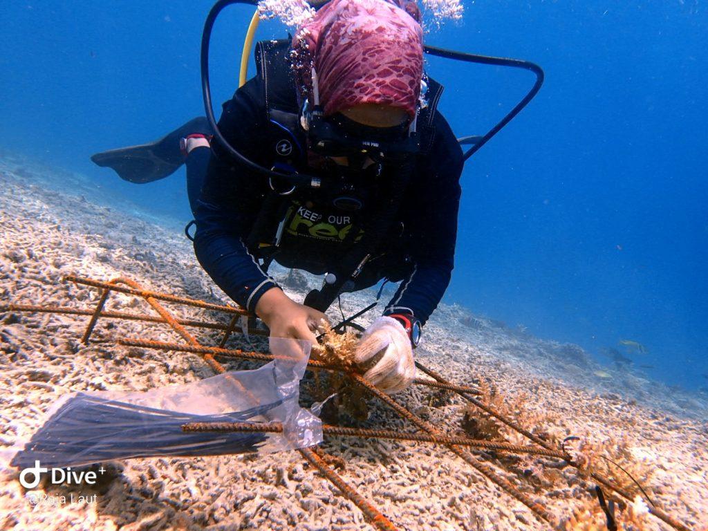 Marine Scholar Programme Perhentian Islands