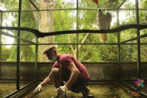 volunteer opportunities with animals