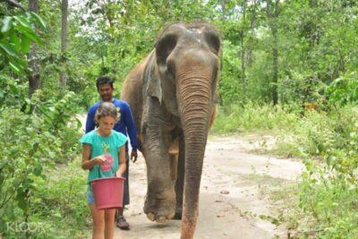 Volunteer wildlife rescue centre